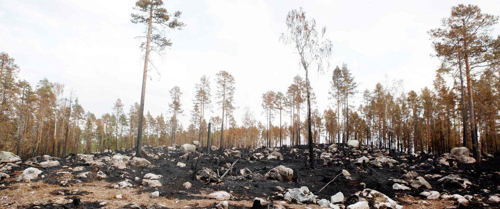 Burnt forest is seen where a wildfire raged northeast of Ljusdal, central Sweden, on July 26, 2018.