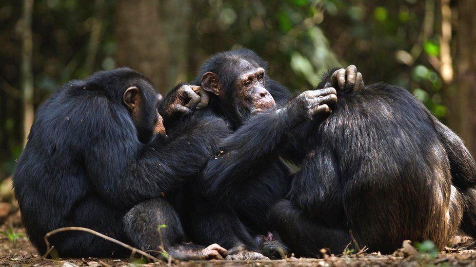 Отличается ли альтруизм людей от бескорыстных поступков животных