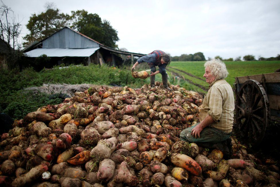 Jean-Bernard and Laurence standing on a pile of vegetables