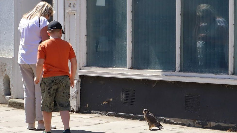 People and a peregrine on a pavement