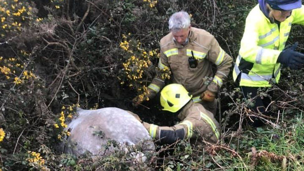 Horse's bottom stuck in ditch with fire fighters