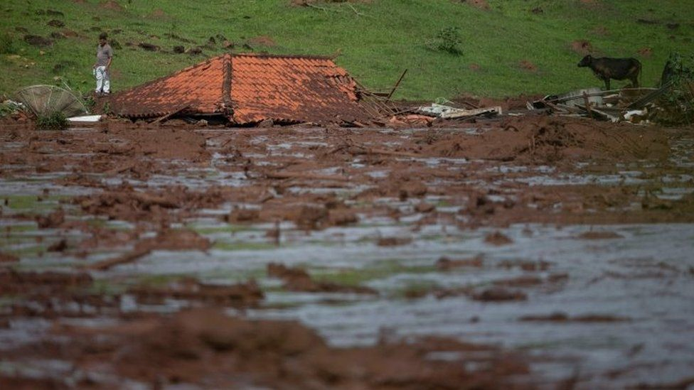 A lone man and a cow are seen by a submerged house after a dam collapse in Minas Gerais, Brazil. Photo: January 2019