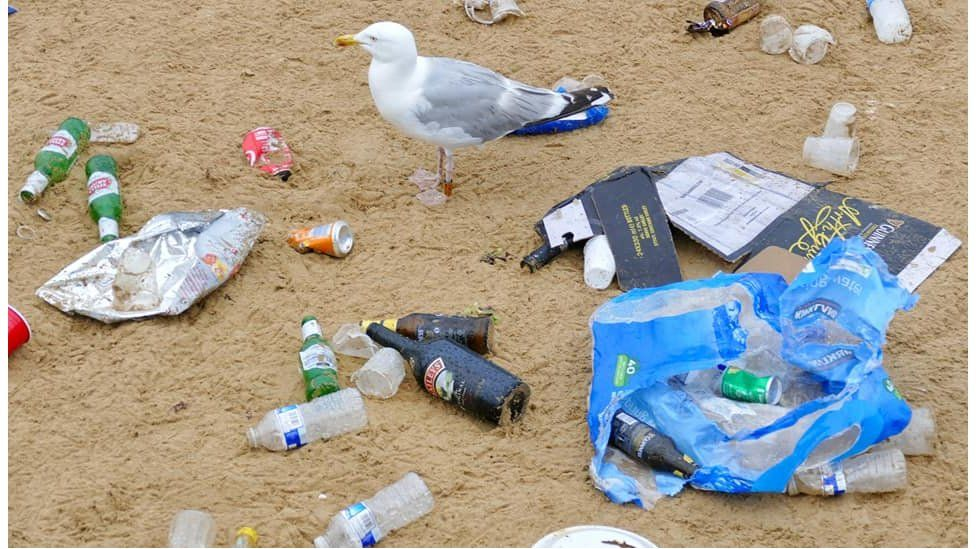 Seagulls and rubbish