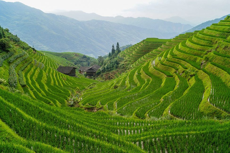 Rice terraces in Longsheng County, Guilin, China