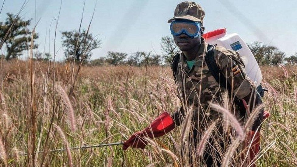 Ugandan soldier spraying crops