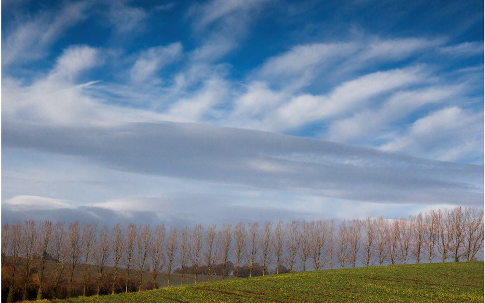 Winter Poplars – Monmouthshire