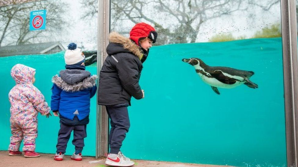 Children looking at a penguin in London Zoo in Regent's Park London