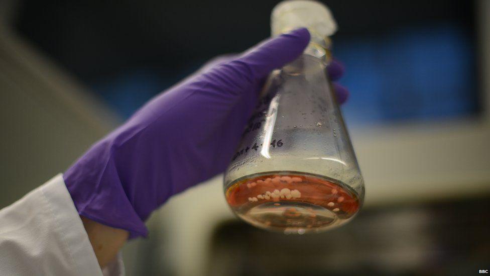 Organoids in flask