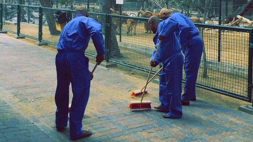 تنظيف حديقة حيوانات دبي عقابا على قتل قطة