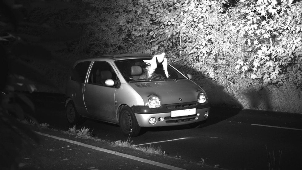 A dove flies across the face of a driver in this speed camera image