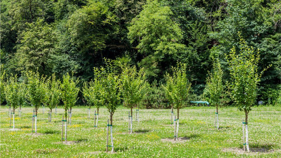 Young trees growing