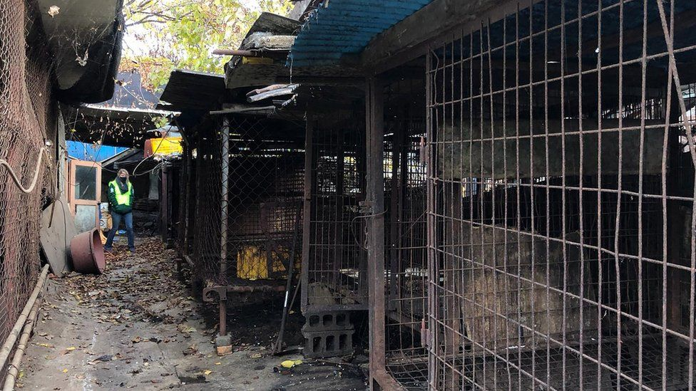 Cages at the Taepyeong-dong dog slaughterhouse complex in Seongnam city, south of Seoul
