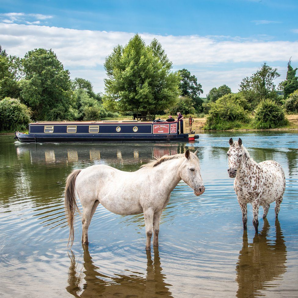 Horses cooling off at Port Meadow in Oxford