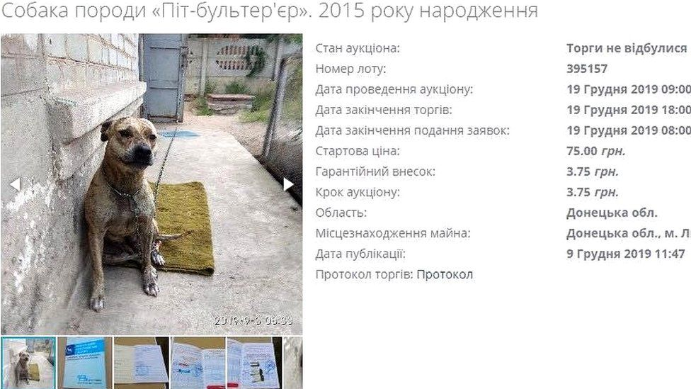 This dog has been put up for auction with a starting price of 75 hryvnia (£2.30; €2.50)