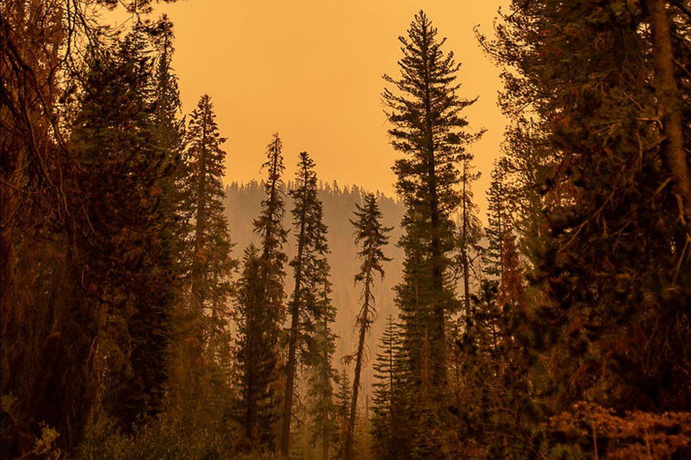 Orange sky in Sierra National Forest amid fires