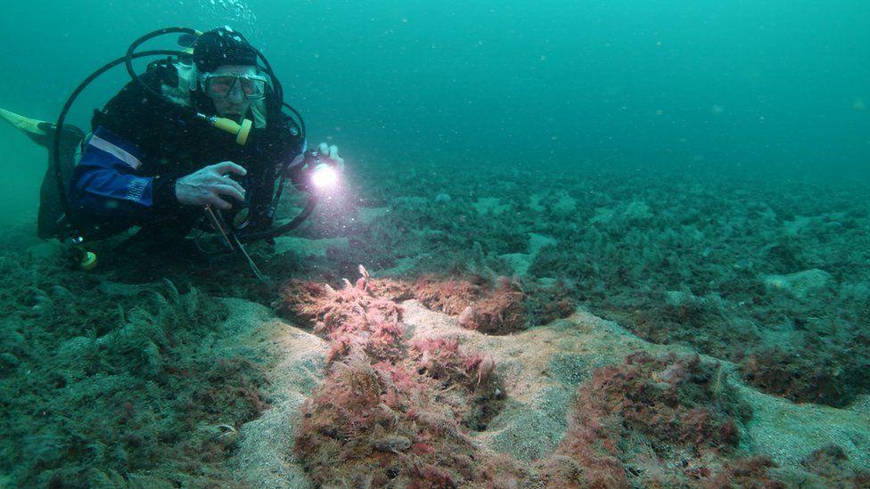 Diver in Loch Carron