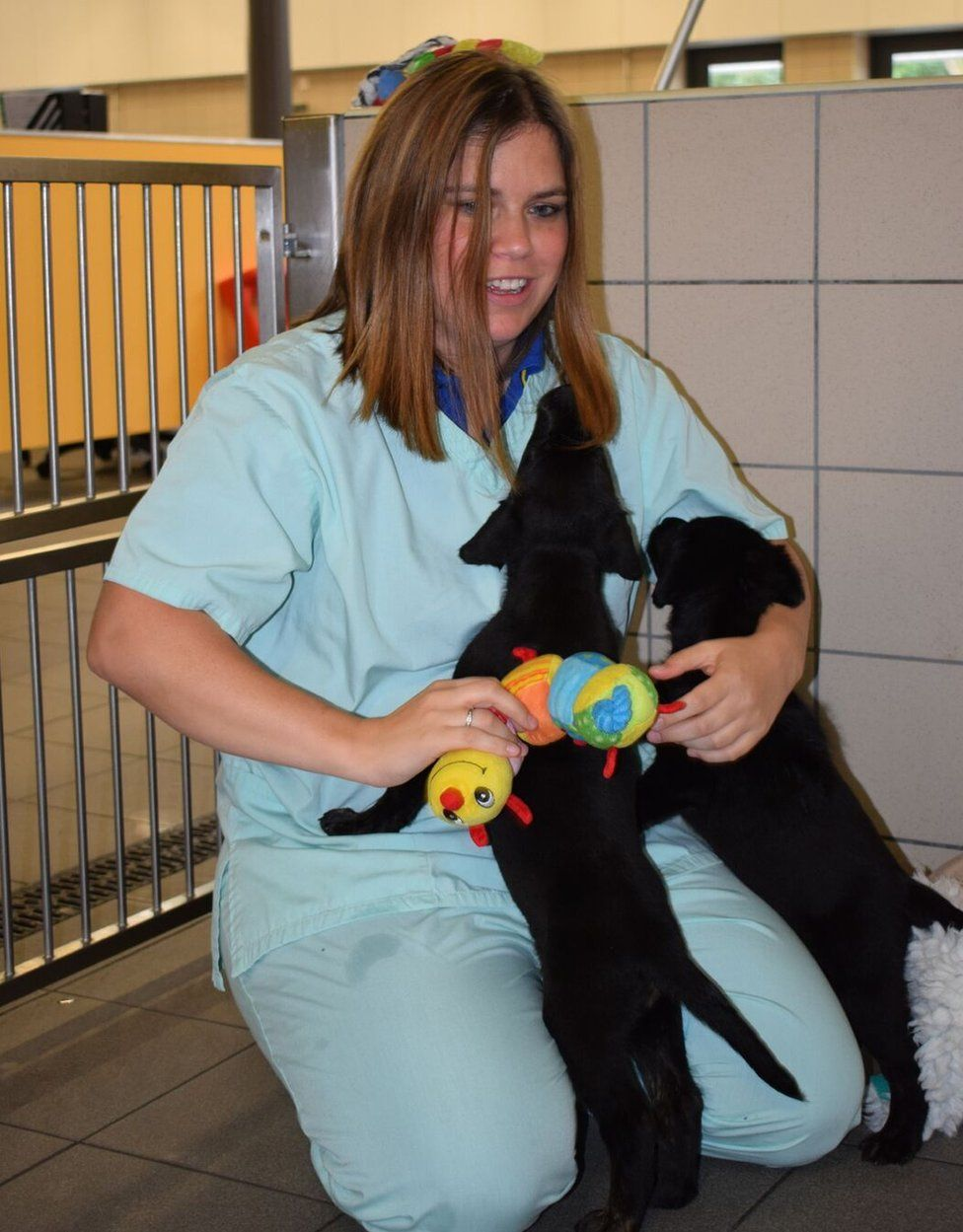 Anna Marinker, one of the dog care supervisors at the Guide Dogs National Breeding Centre, plays with two 6-week-old puppies