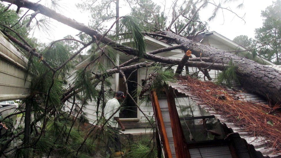 Melvin Gatlin Jr. walks to the back door of his father's house in Valdosta, Ga., beneath a pine tree that crashed onto the roof, Friday, Sept. 2, 2016.