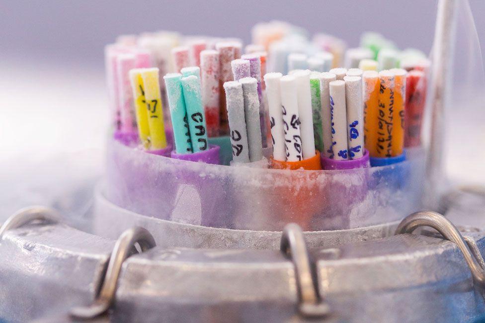 IVF - tubes of frozen gametes