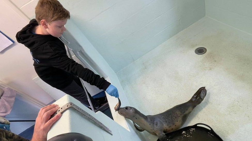 Oliver feeding a herring to one of the seals