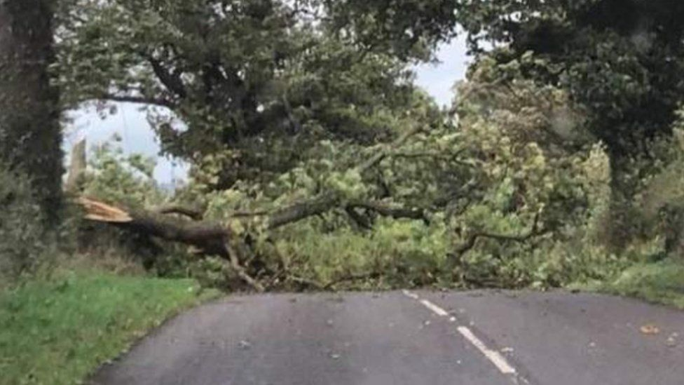 A tree has fallen across the road in Staffordshire brought down by Storm Callum