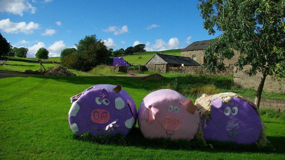Pig bales