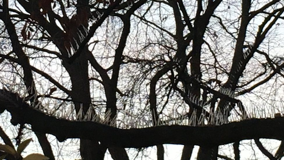 Anti pigeon spikes