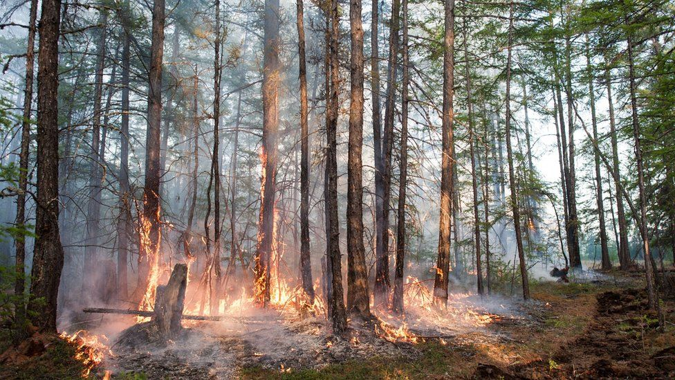 A forest fire in central Yakutia (Sakha Republic in June 2020