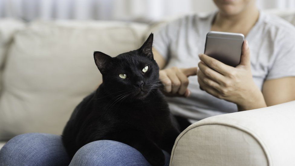 A woman sitting on a couch with her black cat and using a smart phone