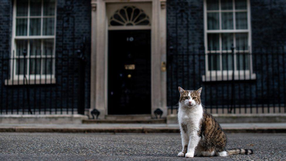 گربه ساکن در خانه نخست وزیر انگلیس منتظر نخست وزیر بعدی