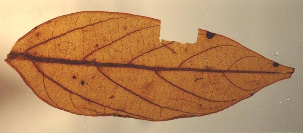 Leaf under high magnification