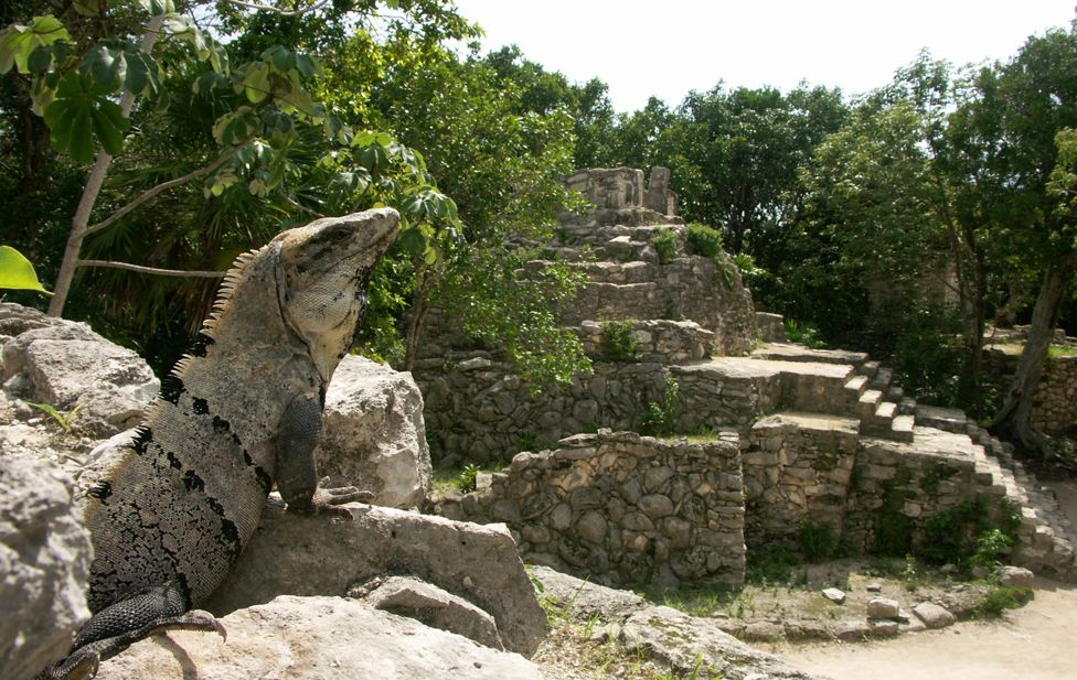 Iguana on ancient Mayan ruins in Xcaret