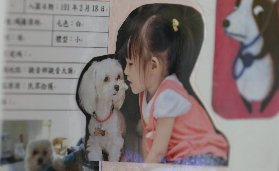 Collage featuring a child sat next to a small dog, on the wall of the animal shelter