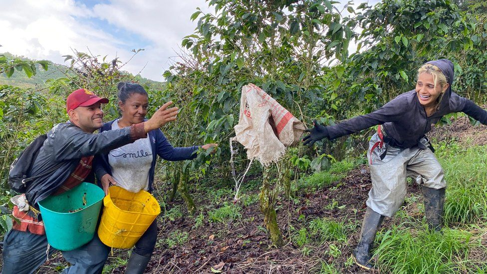 Luis Giraldo and Gloria Piedrahita get some help from a fellow coffee picker at the Santa Isabel estate on Nov 20
