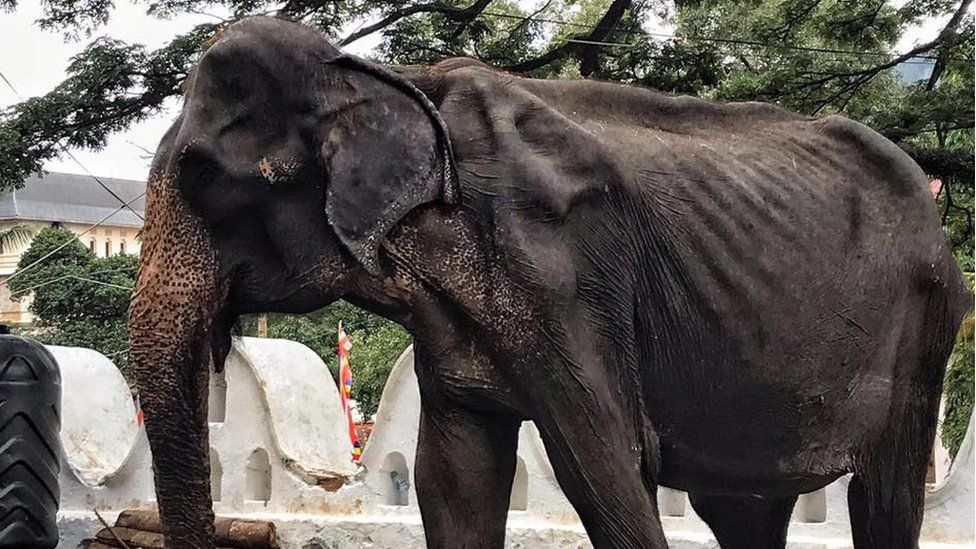 Tikiri the elephant