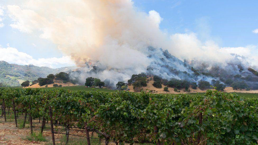 A wildfire threatening a vineyard in California