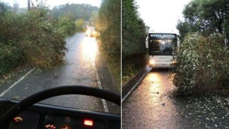 Tree falls in front of coach near St Agnes in Cornwall