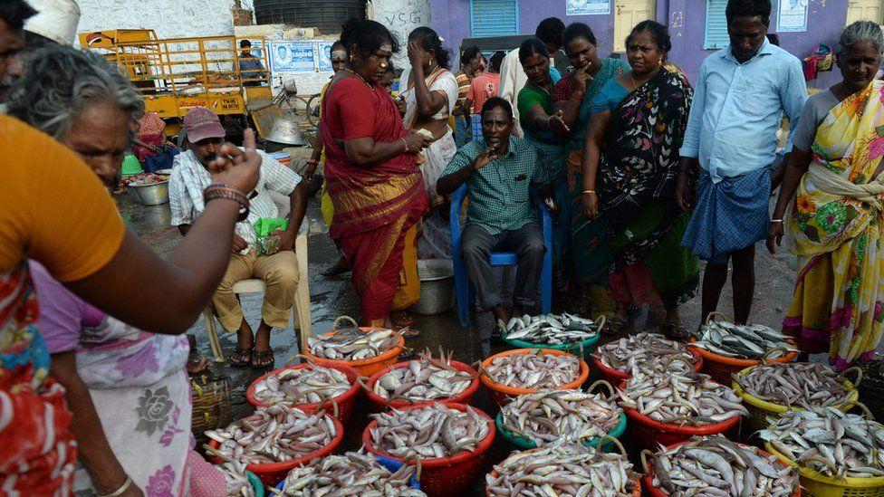 Fish selling in Tamil Nadu