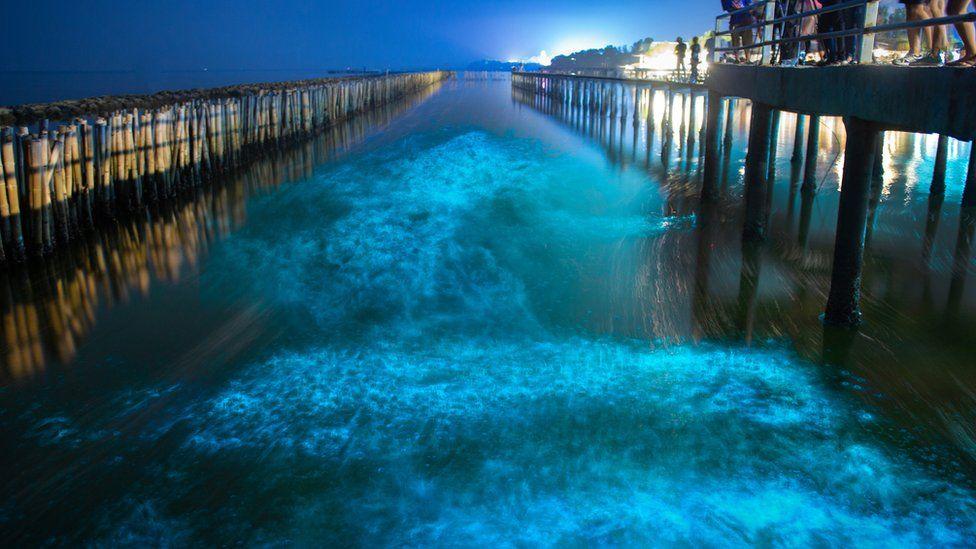 Noctiluca glowing in bay