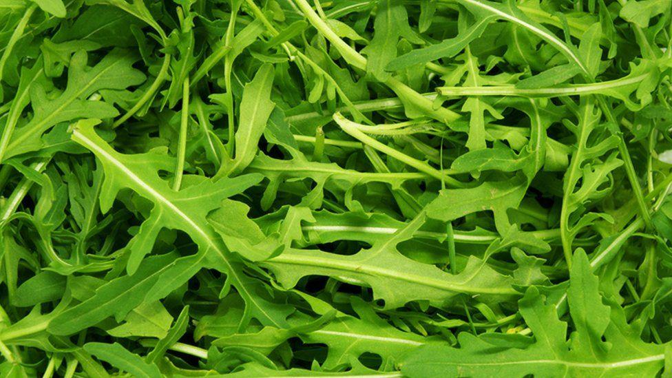 Rocket salad leaves