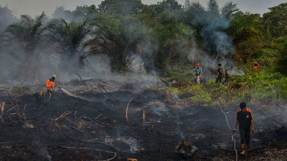 Indonesian firefighters battling a fire at a palm oil plantation in Pekanbaru, Riau