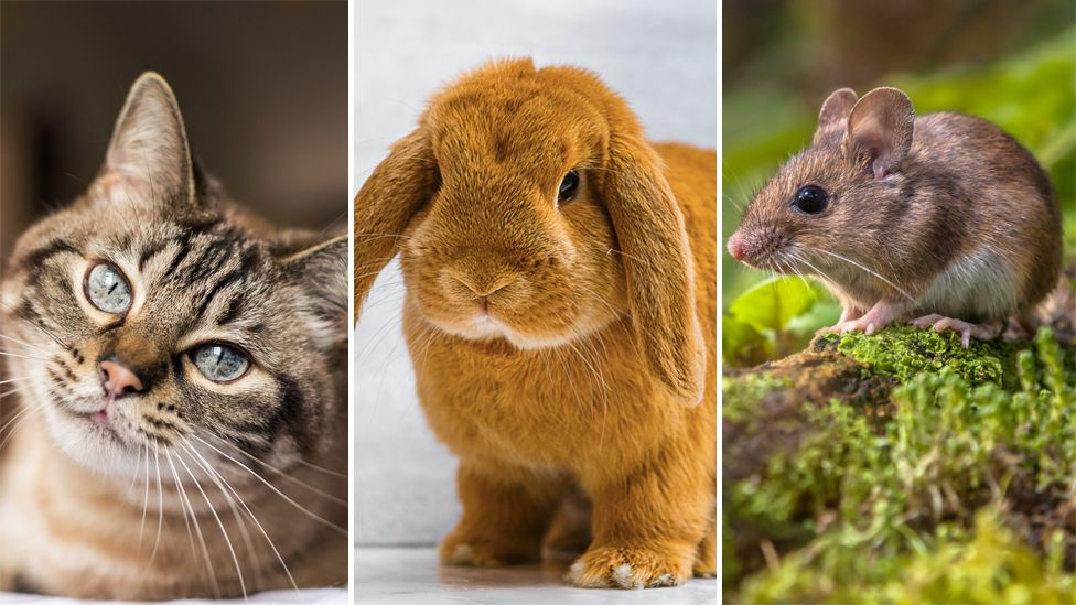 A cat, rabbit and mouse