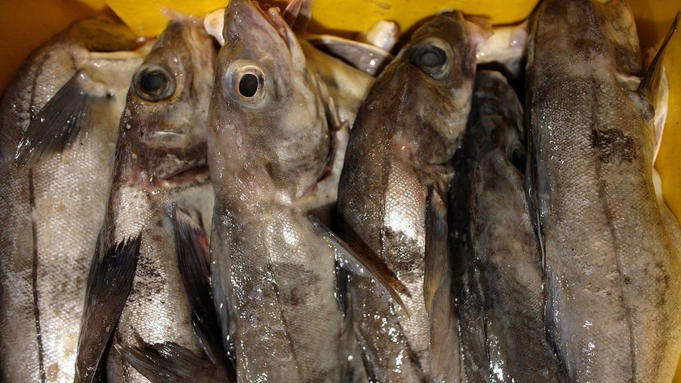 Haddock waits to be bought at Grimsby Fish Docks