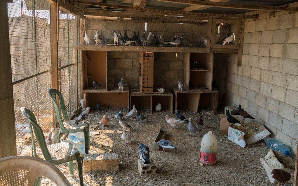 Pigeon coop Chtoura