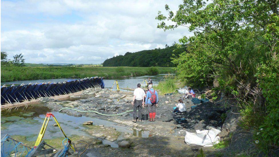 The fossils were found in a river near Chirnside in Berwickshire, Scotland