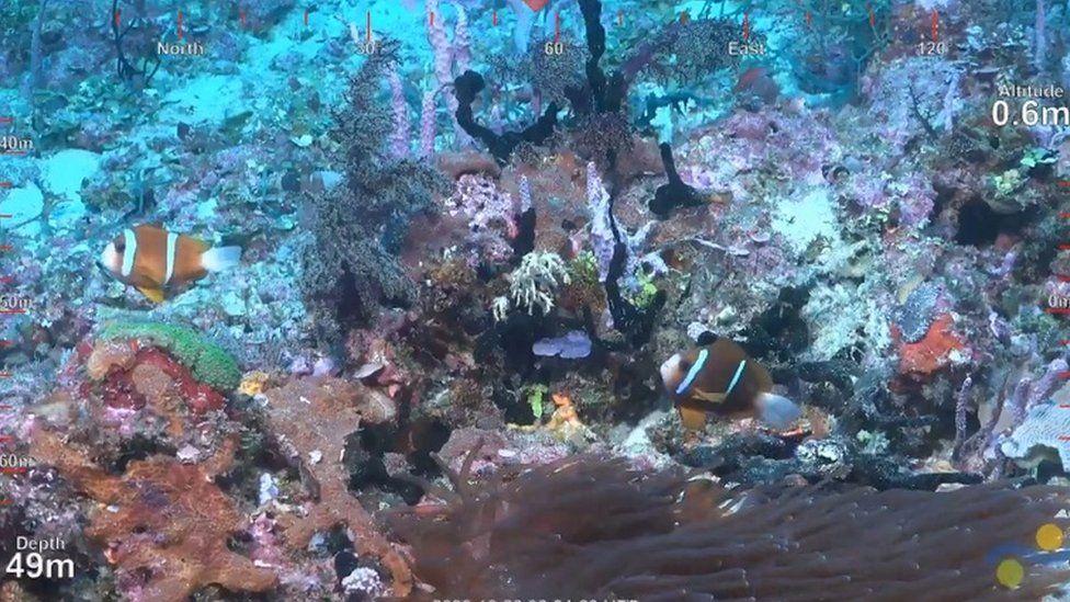 Underwater footage of the reef