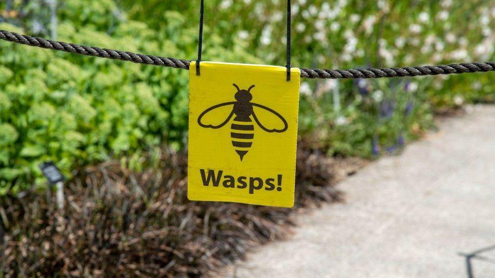 """Sign saying """"Wasps"""""""