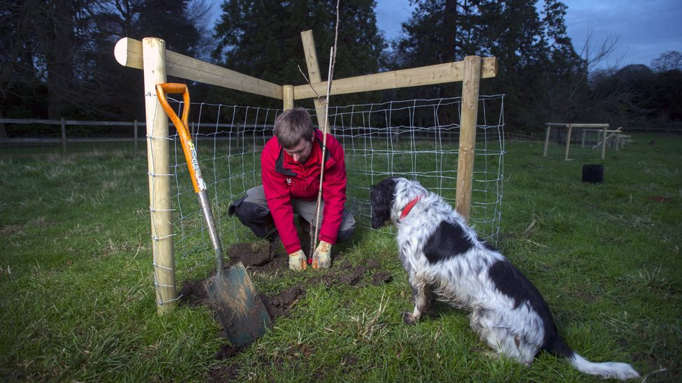 George Holmes and Sprockett the dog plant a tree