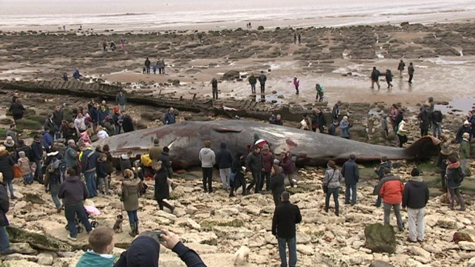 Hundreds of people looking at whale