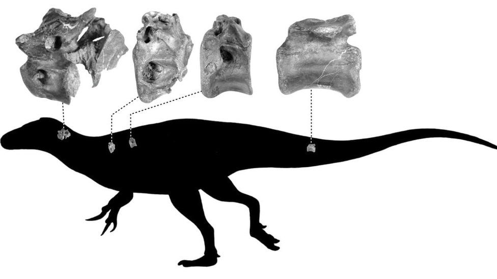 Silhouette of a theropod indicating where the bones were from